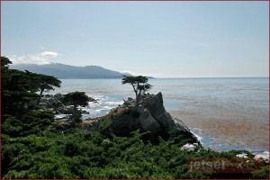 Lone Cypress in Pebble Beach