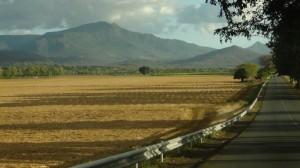 Cut sugar cane crop plantation