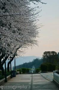 Beautiful blossom