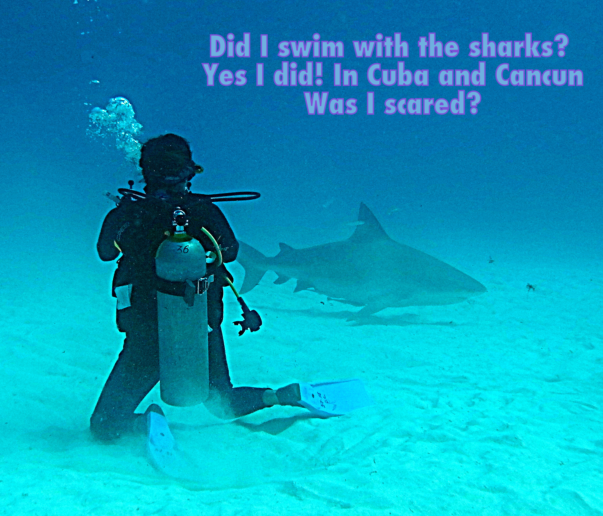 Dec News: Did I swim with the sharks? Was I scared?