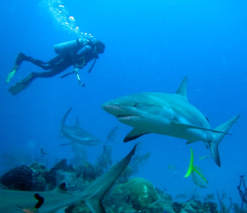 Join me at Gardens of the Queen, Diving in Cuba