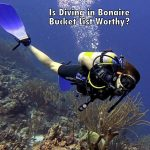 Is diving in Bonaire bucket list worthy?