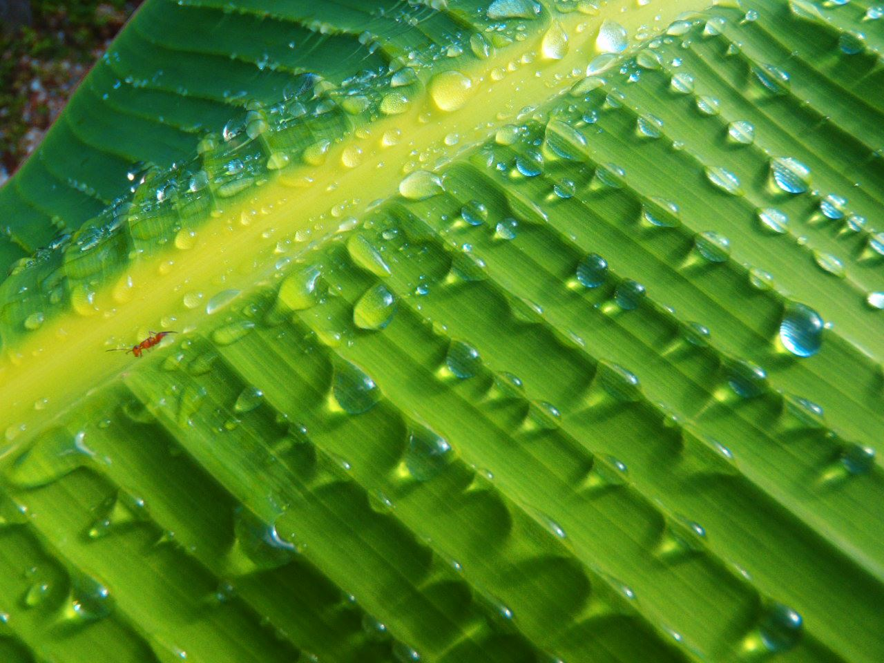 Water drops on a leaf in Costa Rica