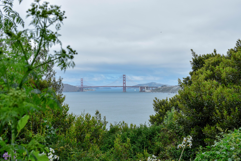 A View From Natural, San Francisco