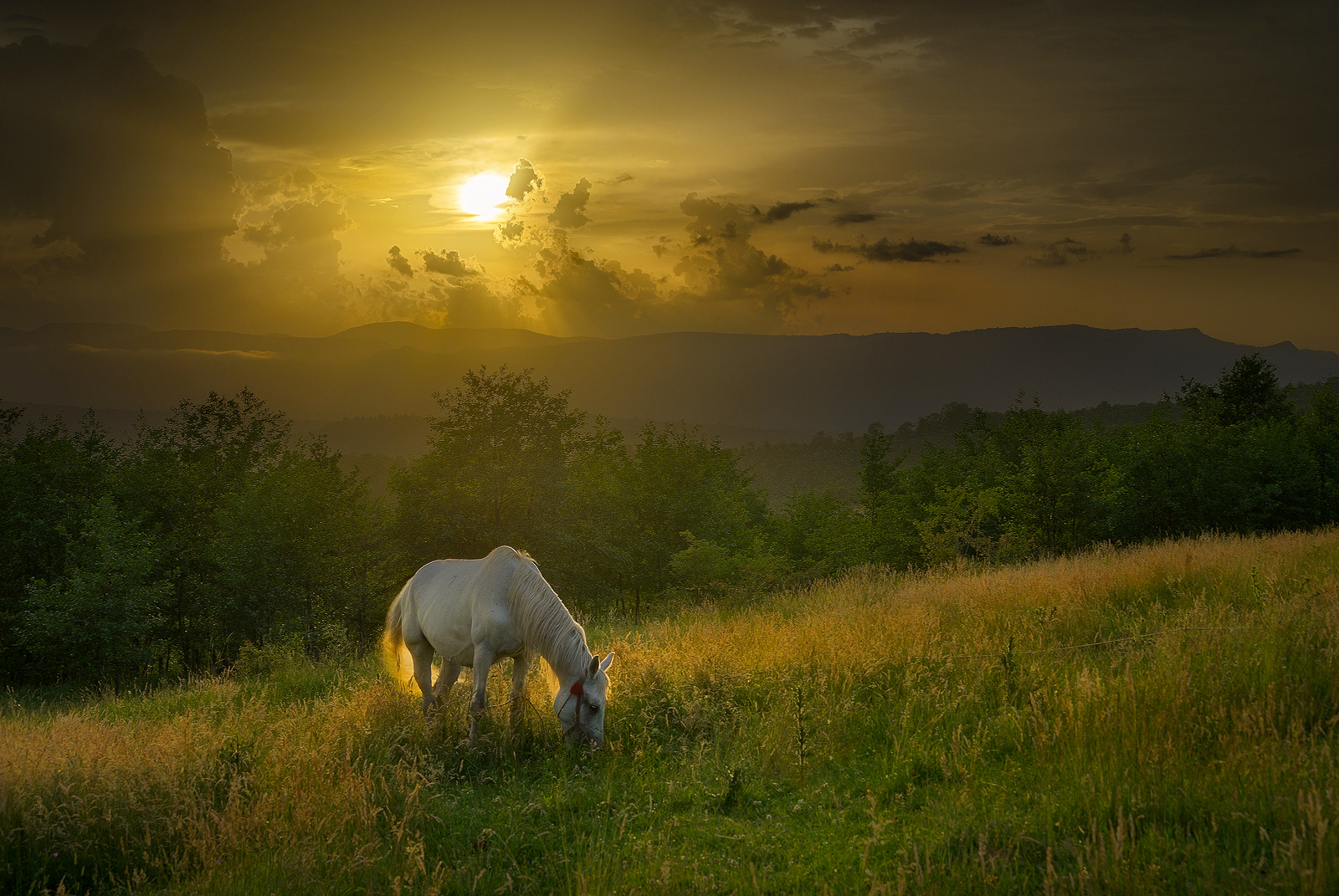 The Horse in the Carpathians